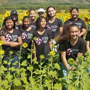 Excite-Camp-Sunflowers-S